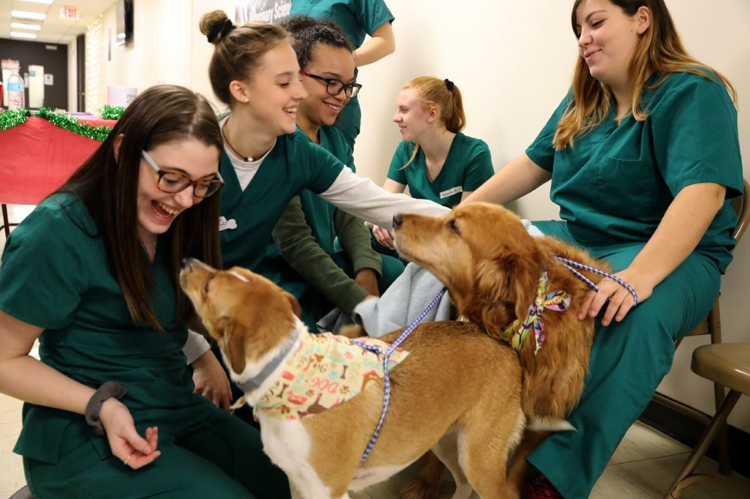 Veterinary students playing with dogs
