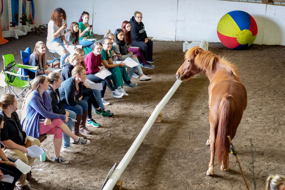 Students observing a horse